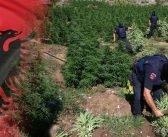 Албанија спрема закон за легализација на медицински канабис